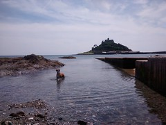 Micha our Boxer dog at St Michaels Mount, Marazion, Cornwall