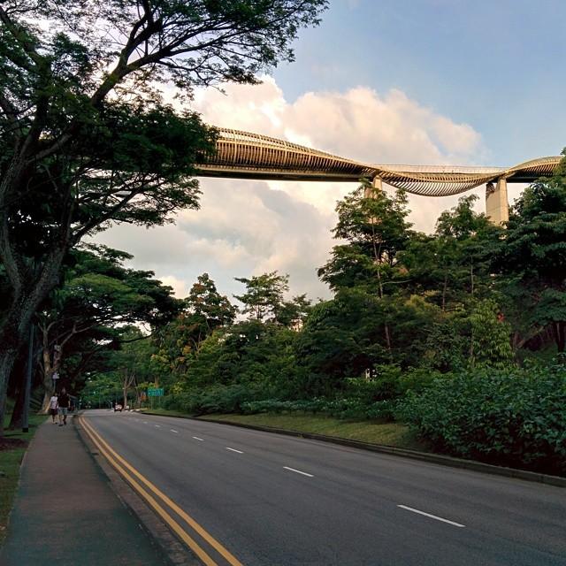don't like Singapore