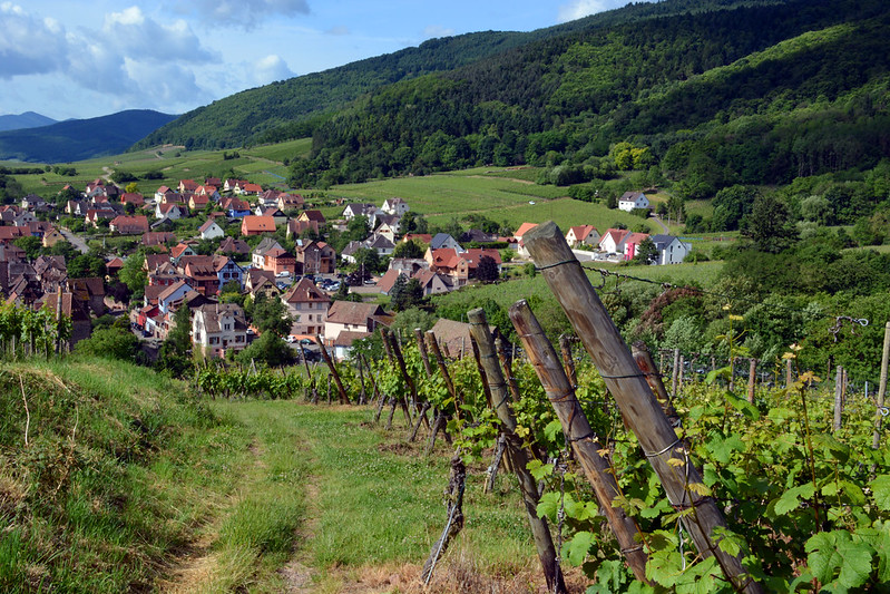 Best Walks in Europe: Vineyard around Riquewihr in Alsace, France