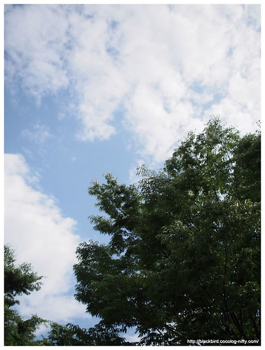 Sky and green