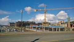 20140430 Grues sur Trondheim (Norvège)