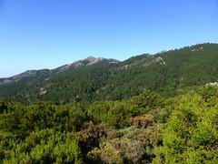 Sentier de descente vers Calafronaja : Punta di I Cavalletti à gauche