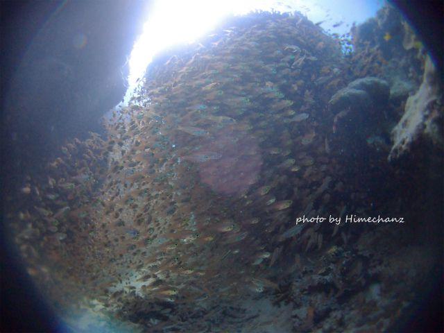 魚もいっぱい群れてましたよ!!!