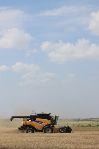 Brandon harvesting.