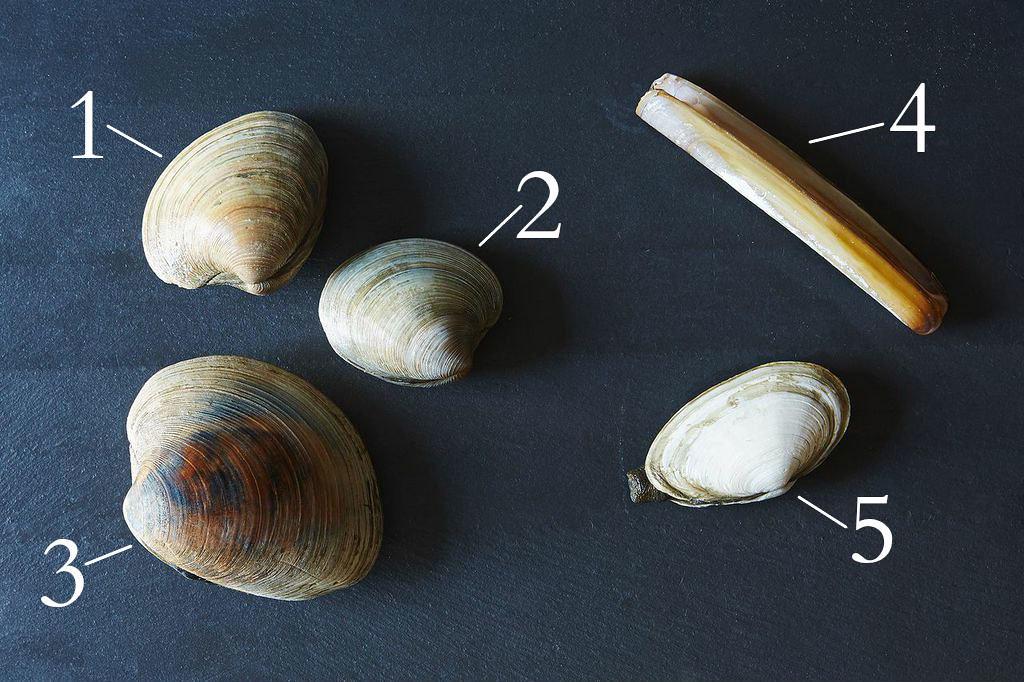 Clam Varieties