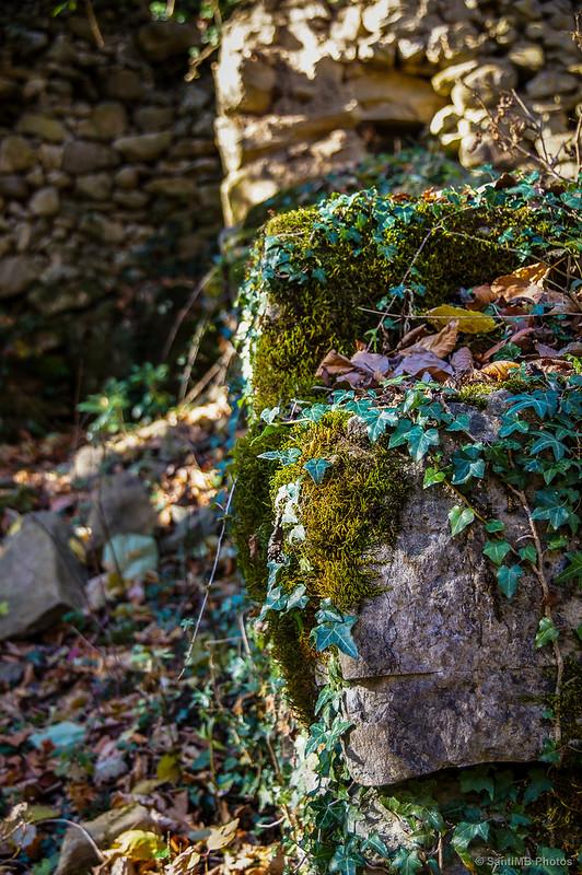 El manto verde
