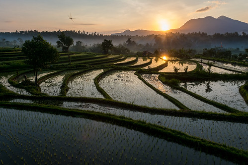 bali sunrise rice paddy tirtagangga