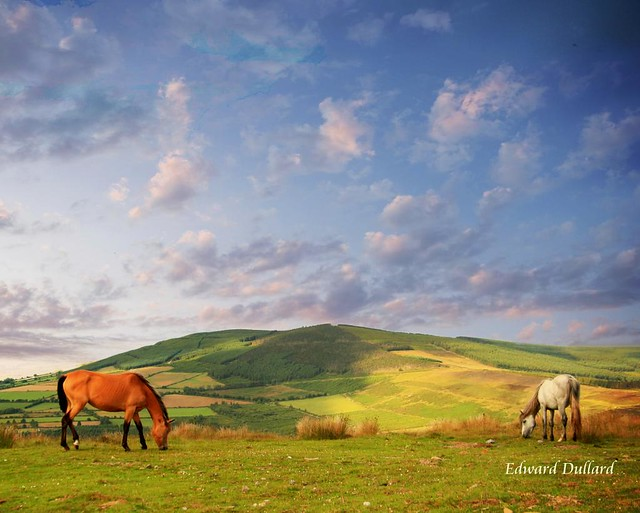 Horses of the high hills.