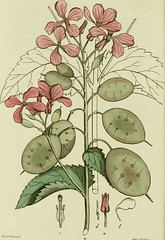 "Image from page 179 of ""Svensk botanik"" (1802)"
