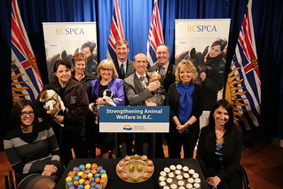 The British Columbia government's latest action to target irresponsible dog and cat breeders in British Columbia is legislation introduced by Agriculture Minister Norm Letnick that will, if passed, provide a framework for the licensing and/or registration of commercial breeders of cats and dogs.