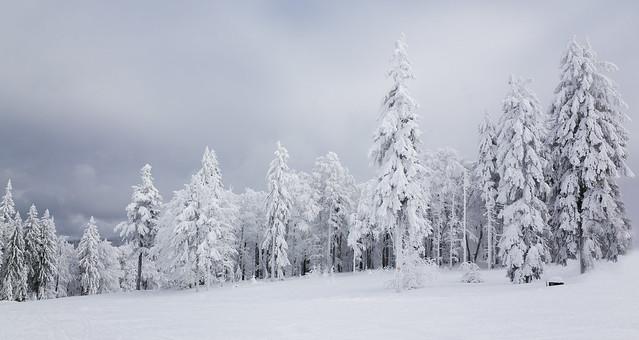 Bohemian Winter #2