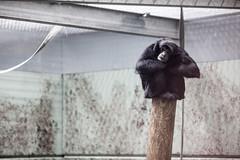 twycross zoo  -3292