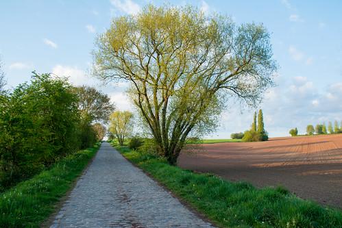 2017 belgique belgium bornival champ field printemps spring route pavée paved road tree arbre green vert