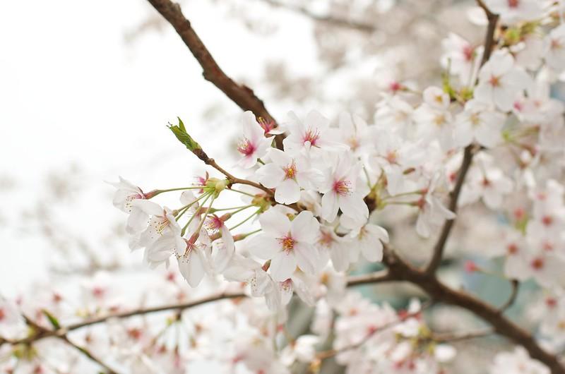 2014-04-05 11-54-11 - _IGP7840