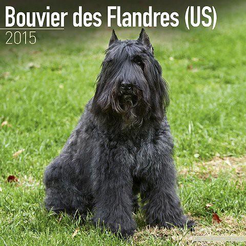 Bouvier-Des-Flandres-US-2015-Wall-Calendar-Pet-Prints-MegaCalendars-9781782081630-Front