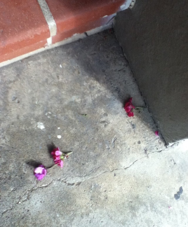 pink flowers on the concrete