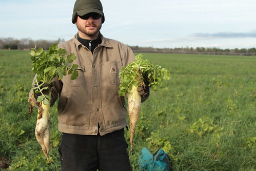 Jason Carter is one of the five South Carolina farmers participating in a field study funded through a Conservation Innovation Grant. His tillage radishes are part of his multispecies cover crop mix. NRCS photo.