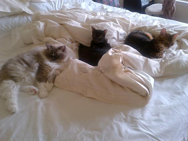 Tyco, Ellie, Koa