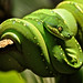 Green vipers 1 by sccart