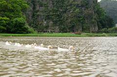Boat ride at Tam Coc