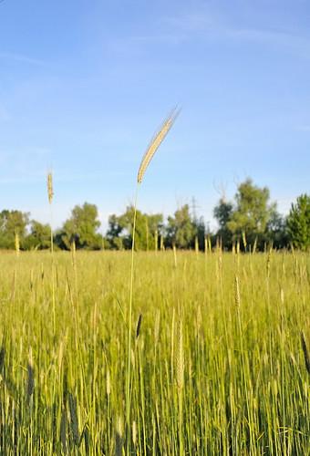 "sky tree field landscape nikon may ukraine nikkor v1 vadim autofocus beldy nikon1 1v1 nikkor10mmf28 elitephotography nikonone flickrestrellas ""nikonflickraward"" saariysqualitypictures nikon1v1 vadimbeldy"