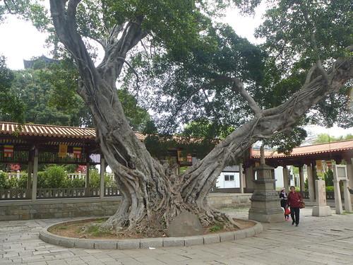 Fujian-Quanzhou-Temple Kaiyuan (3)