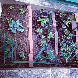 garden: week 2