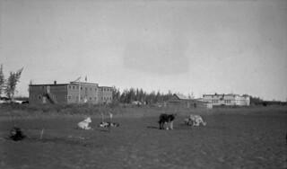 Church of England Mission Hospital and Indian Residential School, with dogs in front, Aklavik, Northwest Territories... / Vue du pensionnat indien et de l'hôpital de la mission de l'Église anglicane, avec des chiens au premier plan, Aklavik (T. N-O).