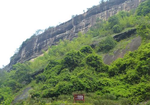 Fujian-Wuyi-Shuillandong-Dahongpao (60)