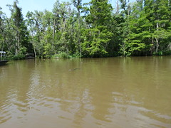 Swamps - Rivers - Bayou (112)