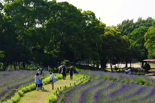 Lavender Festival 034r