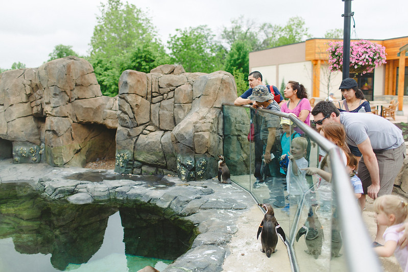 zoo-9