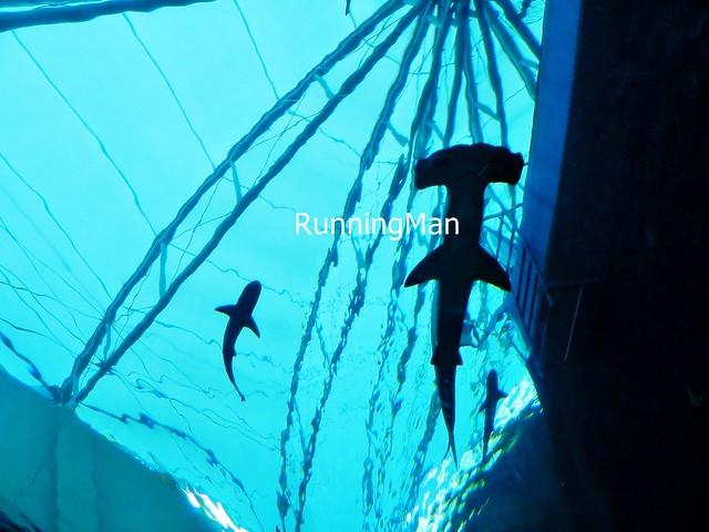 Sentosa Marine Life Park 09