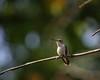 Spring hummer