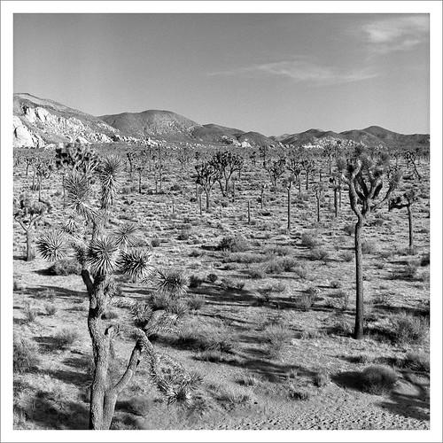 Field of Joshua's