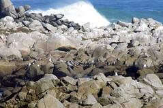 Monterey Area 2