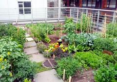 Rooftop Garden Plots