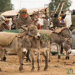 Snuggling Donkeys at Market - Lalibela, Ethiopia