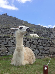 vicuã±a(0.0), alpaca(1.0), animal(1.0), mammal(1.0), llama(1.0), fauna(1.0), guanaco(1.0),