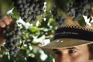 Mendoza: Invierno en Zuccardi