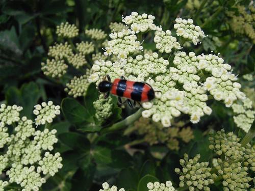 시골집풍경 | 곤충나라