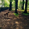 Sunday ramble with the red dog #redbirddog #vizsla #vizslagram #vizslasofinstagram