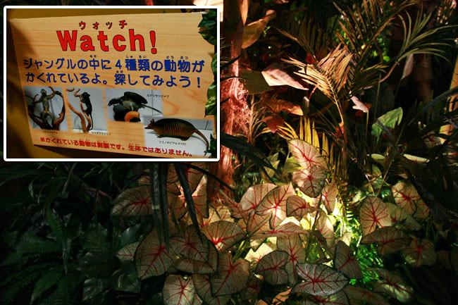 動物を薄暗いジャングルの中で見つけるコーナー