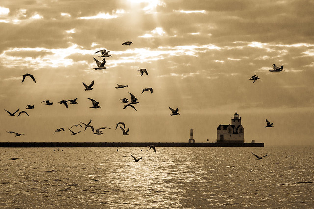 Sea Gulls, Birds, Monochrome, Sepia, Lighthouse, Lake Michigan, Sunbeams