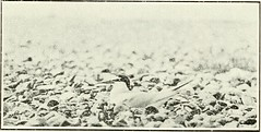 """Image from page 288 of """"Woodland, field and shore : wild nature depicted with pen and camera"""" (1901)"""