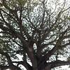Así ha sido mi #TrabajoEnRed, con una raíz y tronco solido para poder extender sus ramas. #EquipoBM #tw