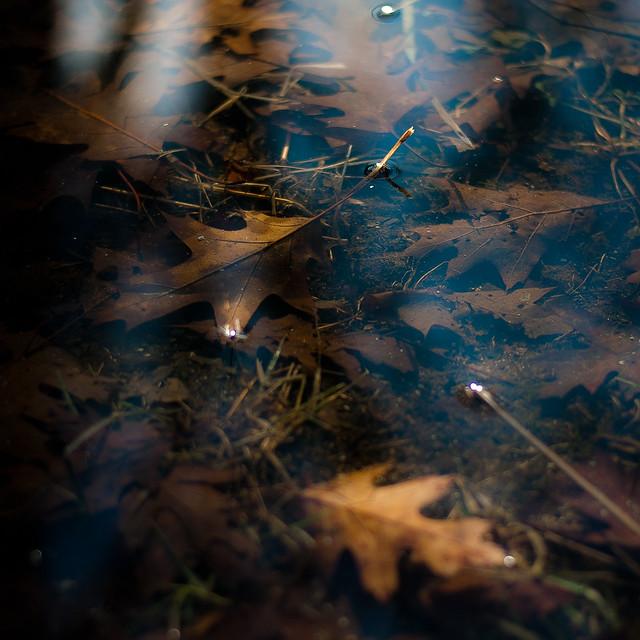 Leaf Debris Under Water 005