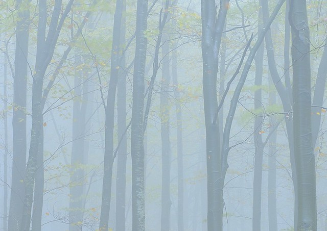 Italy, foggy forest
