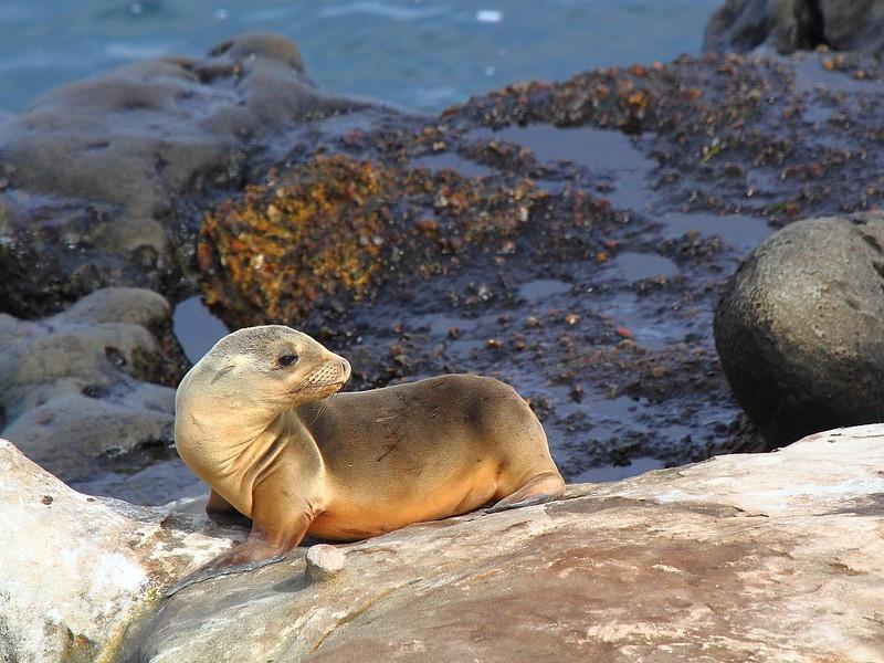 IMG_9902 Sea Lion Pup