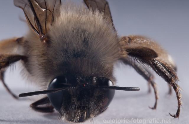 Primăvară, albinuțe și... tuburi macro 13893134799_4246e07ff3_z